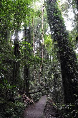 Regenwald und Wasserfälle im Dorrigo Nationalpark