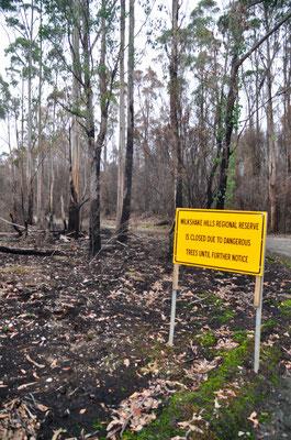 Folgen des Waldbrandes Anfang des Jahres 2016