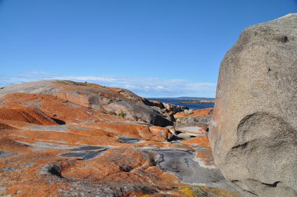 Mit orangen Flechten überzogene Felsen