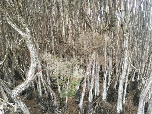 Da sieht man vor lauter Bäumen den Wald nicht mehr.