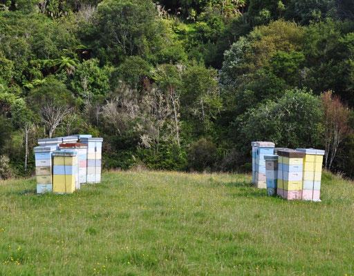 """Typische """"Bienenhäuser"""" in Neuseeland"""