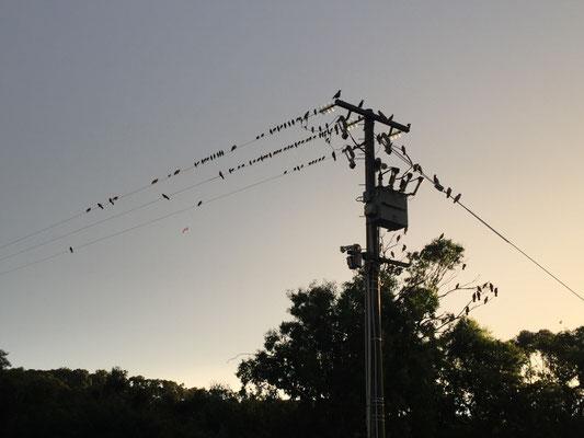 Alle Vögel sind schon da.