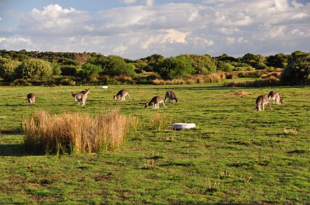 Unterwegs auf dem Wildlife-Walk