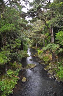 Unterwegs zu den Whangarei Falls