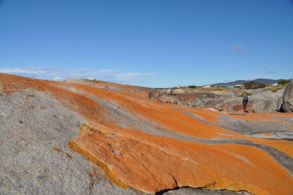 Faszinierend, was für intensive Farben die Natur hervorbringen kann.