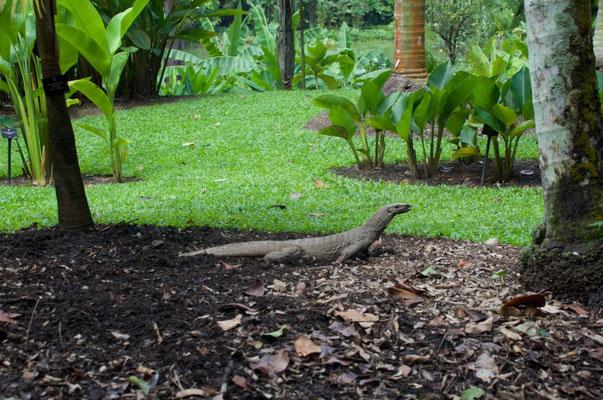 Echse im Botanischen Garten