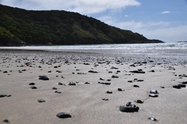 Matai Bay - kaum Muscheln, dafür zahlreiche schwarze Steine