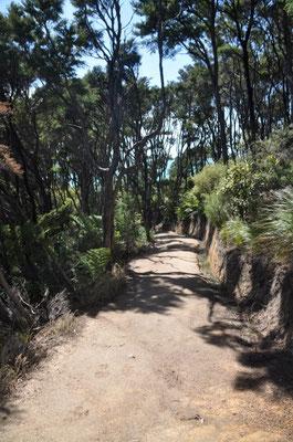 Und los gehts! Unterwegs auf dem Abel Tasman Coastal Track