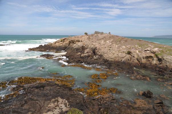 Aussicht vom Katiki Point an dessem Fusse sich zahlreiche Seelöwen tummeln