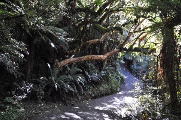 Wanderung durch mystischen Farn-Wald