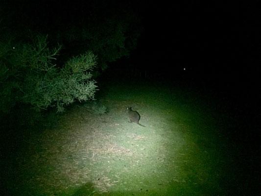 Tierische Besucher am Abend...