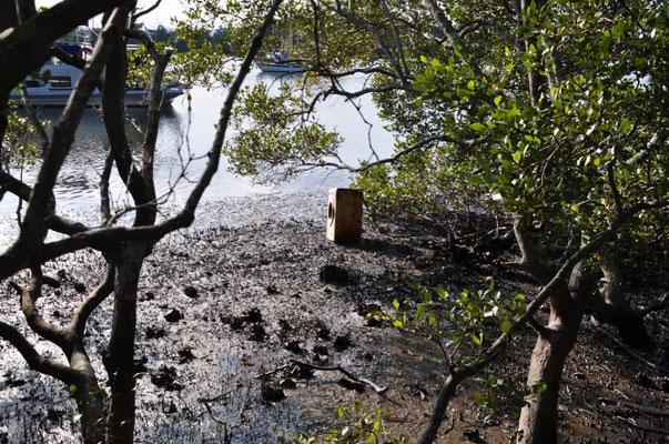 Wanderung entlang des Tilligerry Creeks...vorbei an Mangrovenbäumen...und einem Fremdkörper der (sich) gewaschen hat.