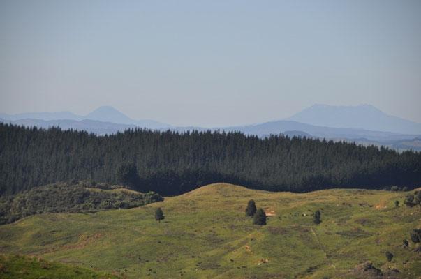 Blick zu den Bergen im Tongariro National Park