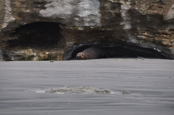 Wer versteckt sich denn da unter dem Felsen?