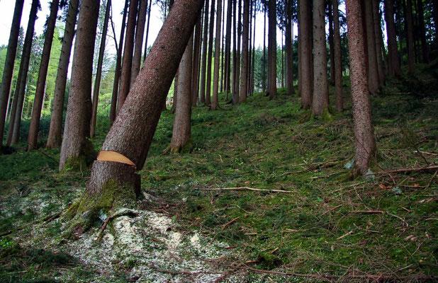 """""""Baum kommt!"""""""