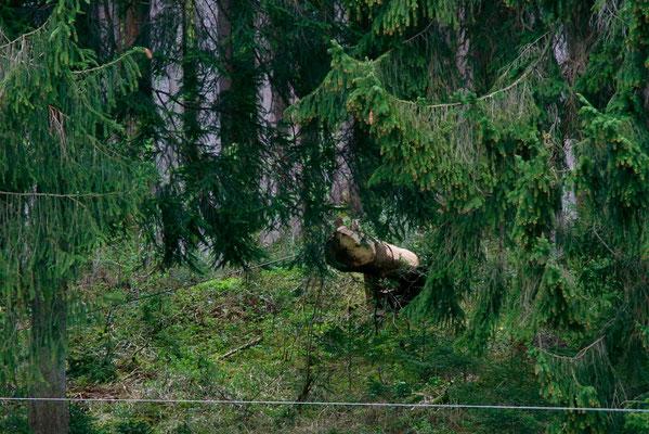 ...von der Wiese aus, über die der Baum gezogen werden muss.