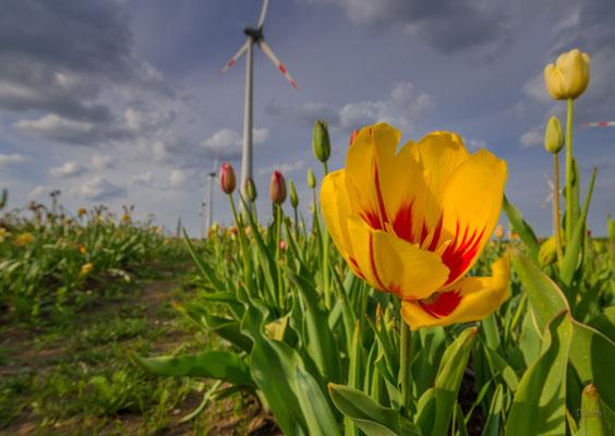 Windpark, Neuenwalde