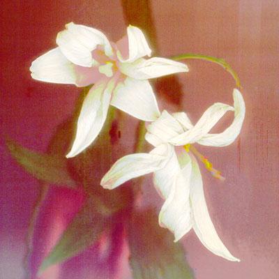 © En velours blanc - vendu 2/30
