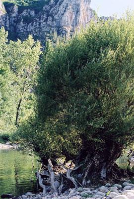 © Au bord du Tarn (3)