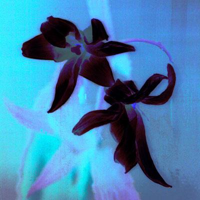 © En noir velours - vendu 1/15