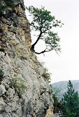 © Les Gorges du Tarn (5)