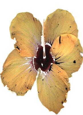 © Fleur d'éternité - vendu 3/30