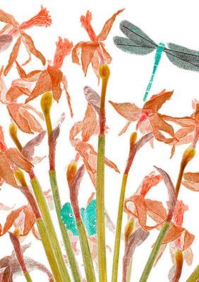 © Bouquet aux papillons