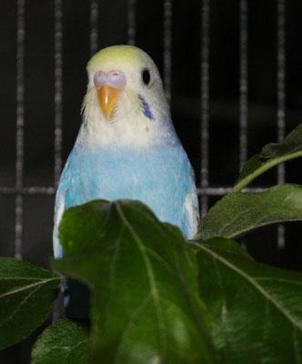 Ringnr. 6 im Apfelgrün