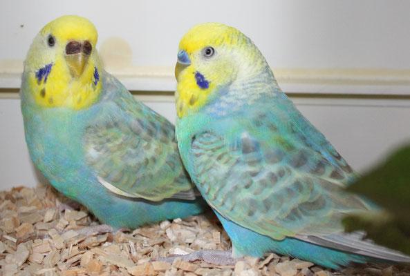 Leila und Chris - auch da war das Vorjahresfoto schöner ;-)