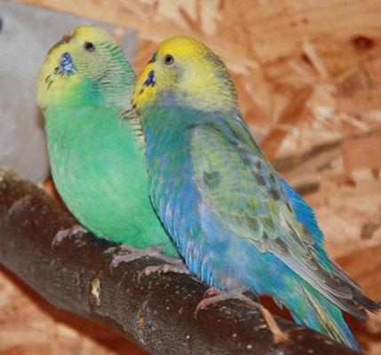 Otto - im Hintergrund Lola - die beiden verstehen sich im Jänner 2012 besonders gut.