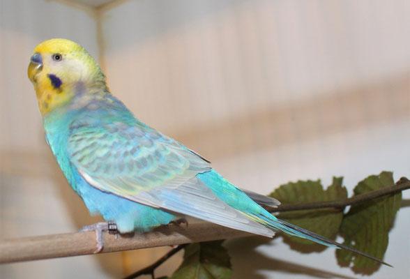 Sparrow am 4.8.2020
