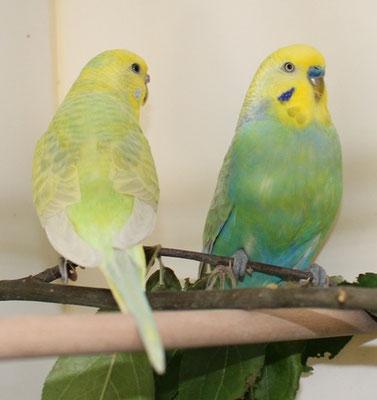 Shirley und Dave - mit stolzgeschwellter Brust ;-)