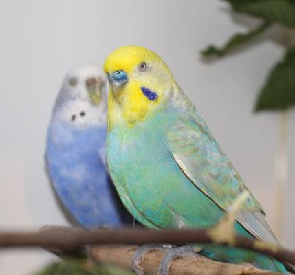 Dave und Milka - Foto ist allerdings vom Vorjahr ;-)