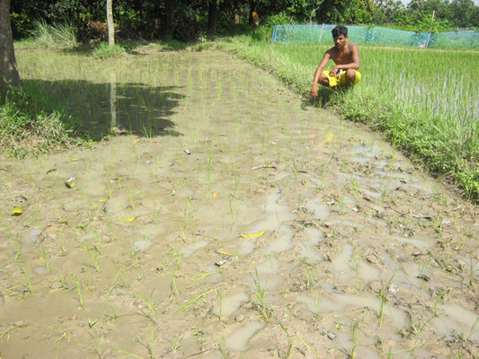 Observation attentive de la parcelle de réplication par un agriculteur
