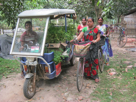 Transportation of seedlings