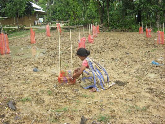 Prepariing for Moringa cultivation