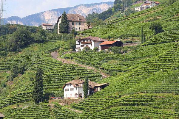 Weinkultur in Südtirol