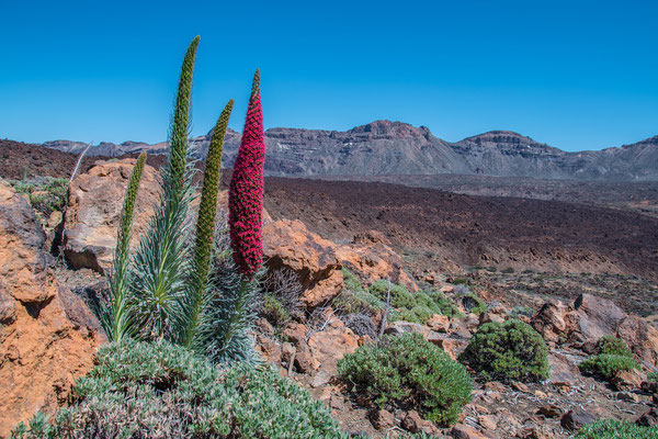Tnereiffa - Teide Nationalpark