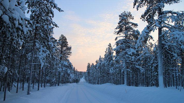 Verschneite Straße im Wald