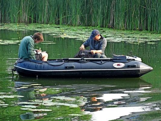 Oliver Hauck vom Alfred-Wegener-Institut (links) und Matthias Emmrich vom Anglerverband Niedersachsen überprüfen die Wiederansiedlung des europäischen Flusskrebses.