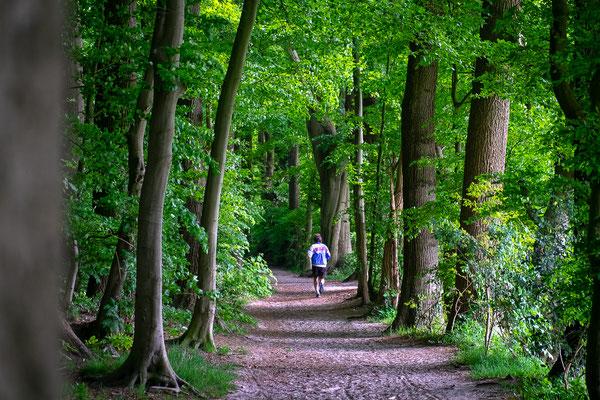 Direkt hinter dem Weyerberg befindet sich ein größeres Waldstück.