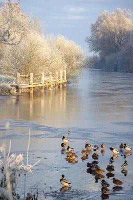 Die Hamme im Winter