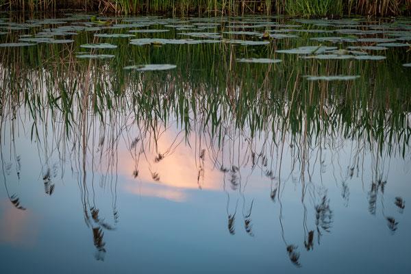 Spiegelungen auf dem Wasser der Hamme
