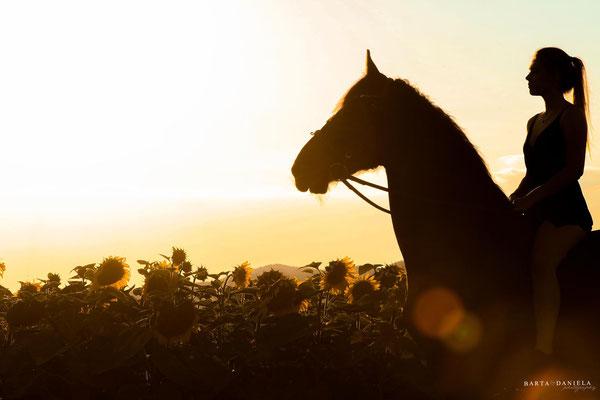 Sonnenblumenshooting