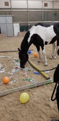 Gelassenheitstraining unserer Pferde