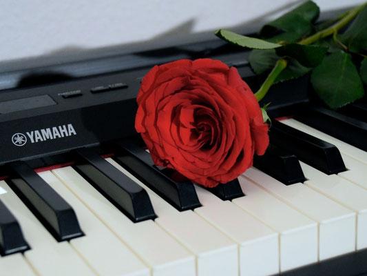 Rose auf dem Piano