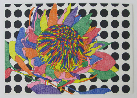 キングプロテア:King protea 2017 pen,color pencil on paper 21.0 × 29.7 cm ¥ 62,640.-