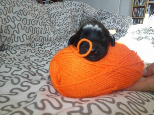 """Hündin """"Orange"""""""