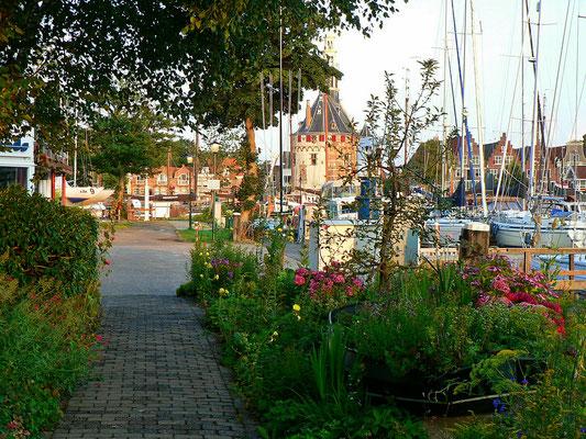Viel Grün und schöne Blumen im WSV Hoorn