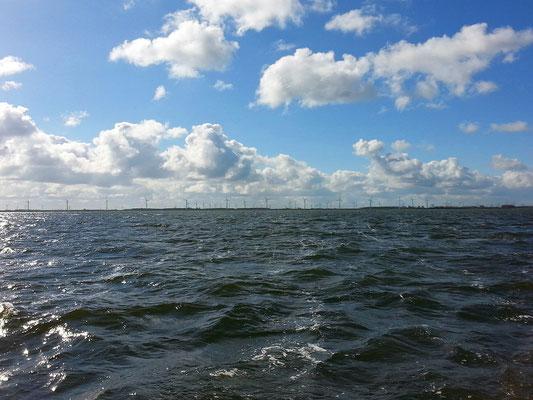 Heute ist es etwas ungemütlich auf dem Ijsselmeer